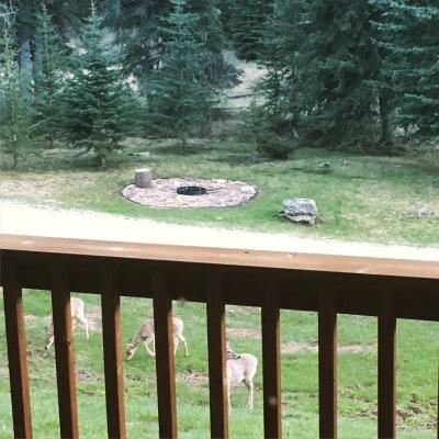 Deer at Cabin