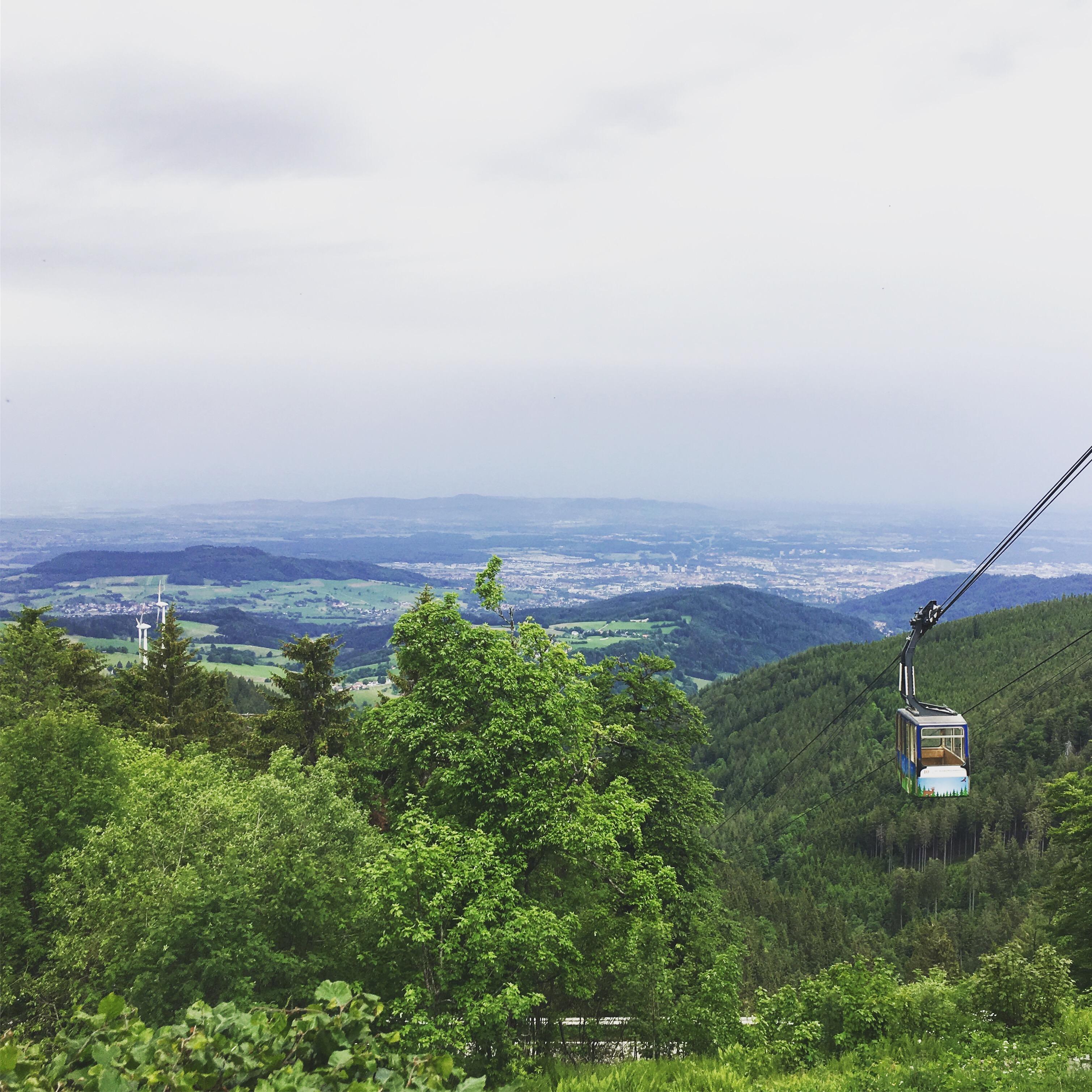 Black Forest tram